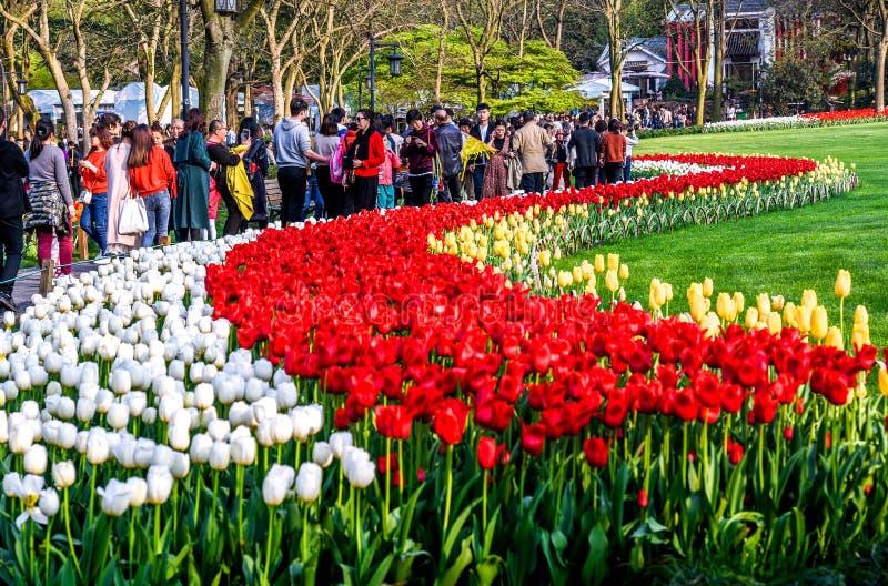 HANGZHOU, CHINA - Maart, 26 2018: De lentelandschap, kleurrijke verse tulpen die in beroemde Hangzhou-tuin bloeien royalty-vrije stock afbeelding
