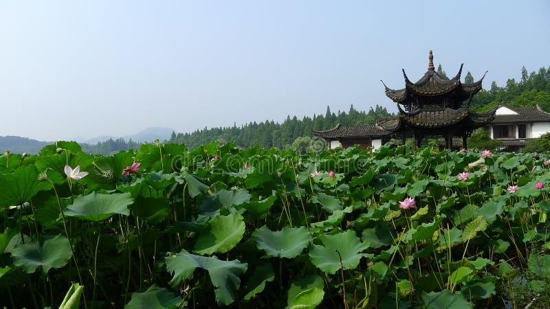 Hangzhou Westsee, Lotus Stirred durch Brise in Quyuan-Garten stockbilder