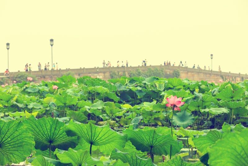 Hangzhou zachodni jezioro łamająca bridżowa sceneria obraz stock
