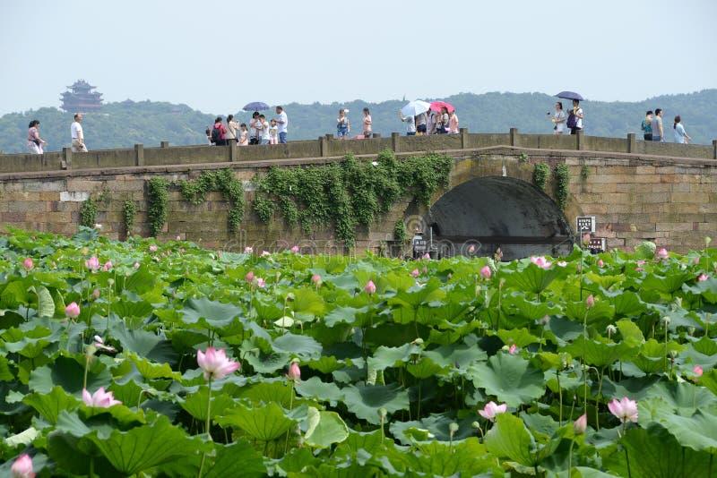 Hangzhou zachodni jezioro łamająca bridżowa sceneria Naturalny, liść obrazy royalty free