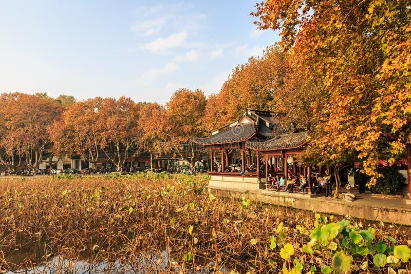 Hangzhou zachodnia jeziorna jesień więdnący lotosowy liść zdjęcia stock