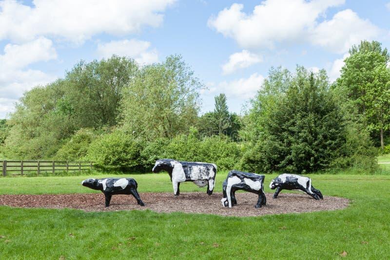 Haniebne betonowe krowy w Milton Keynes obrazy stock