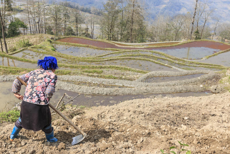 Hanilandbouwer die aan een rijstterras werken in YuanYang, Yunnan, China Hani is één van de 56 minderheden in China en is inheems stock afbeelding