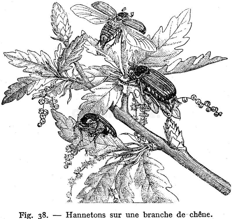 Hannetons Free Public Domain Cc0 Image