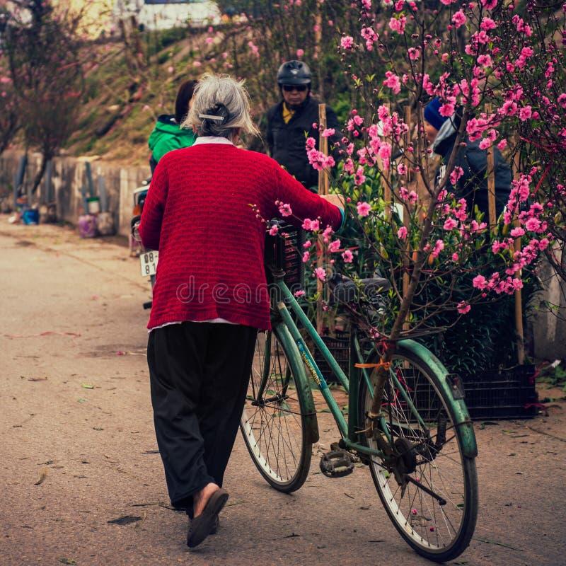 Hanoi, Vietnam - 13 Februari, 2015: Oude vrouwengang met haar fiets om perzikbomen in de bloemmarkt voor traditionele Tet te kope stock foto's