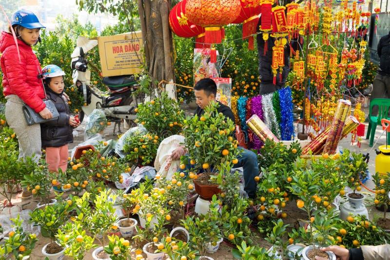 Hanoi Vietnam - Februari 7, 2016: Träd för folkförsäljning och dekorativt för rund kumquat för köp på gatan Samman med persikablo fotografering för bildbyråer