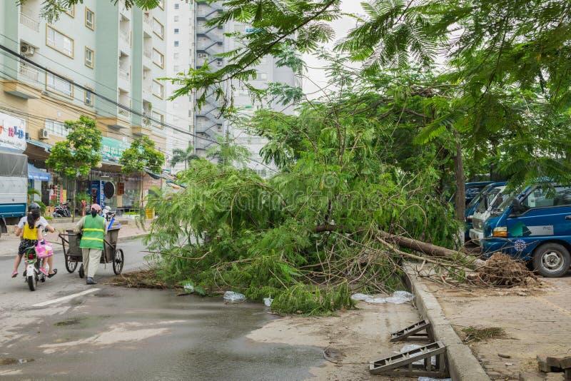 Hanoi, Vietnam - 14 giugno 2015: L'albero caduto ha danneggiato sulla via dalla tempesta pesante naturale del vento in via di Kim immagine stock libera da diritti