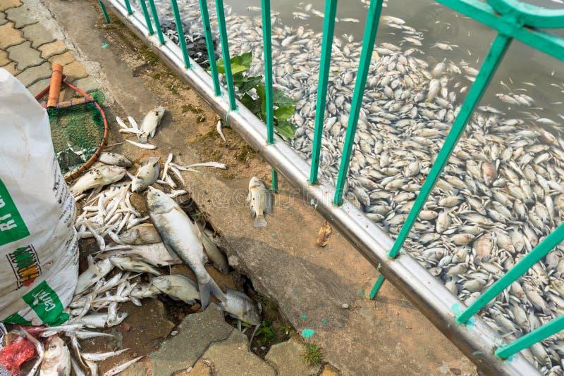 Hanoi, Vietnam - 2 Oct, 2016: De stapel van dode vissen die op grond leggen zocht uit verontreinigd water bijeen bij het Westenme royalty-vrije stock fotografie
