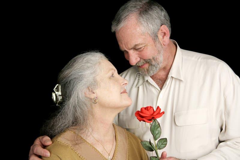 hans rose fru royaltyfria bilder