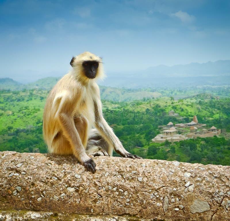 Kumbhalgarh małpa obraz stock