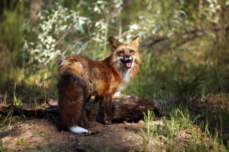 Download Happy stock image. Image of wild, female, nature, animals - 10008085