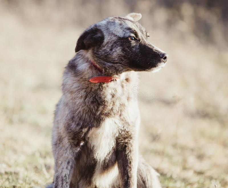 Happy adopted stray dog, adopt don`t shop. Happy adopted stray dog in spring, adopt don`t shop concept royalty free stock photography