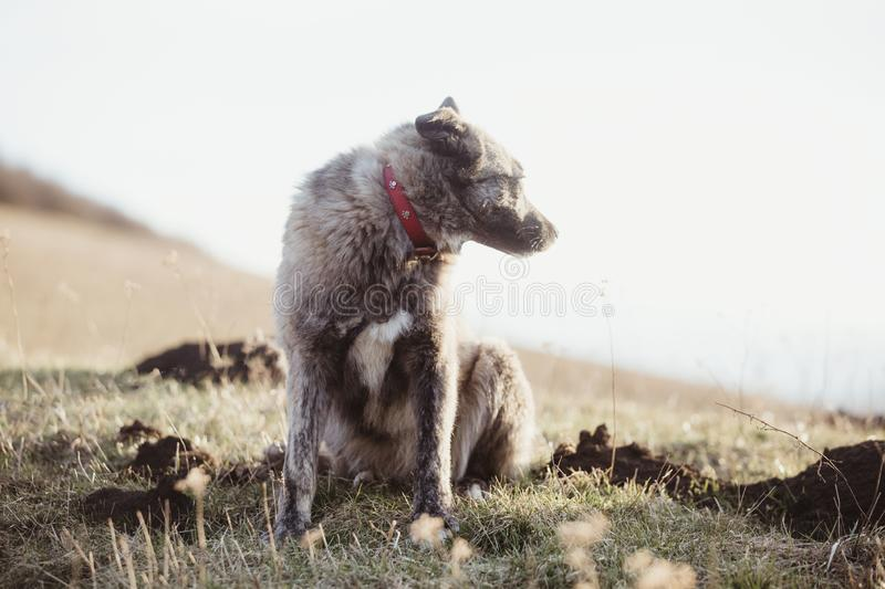 Happy adopted stray dog, adopt don`t shop. Happy adopted stray dog in spring, adopt don`t shop concept royalty free stock image