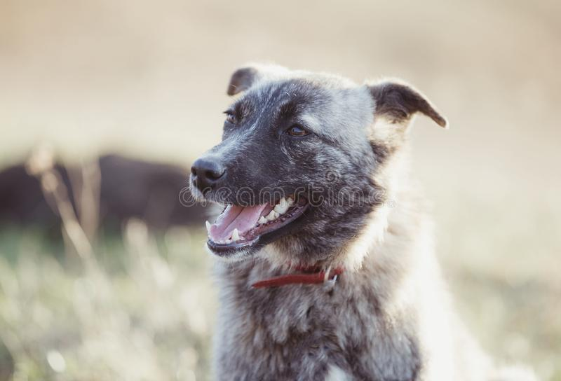 Happy adopted stray dog, adopt don`t shop royalty free stock photos
