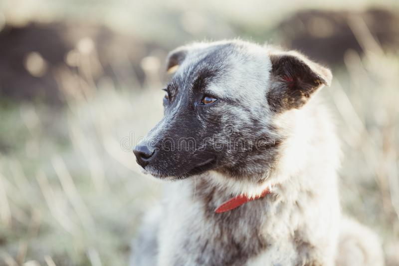 Happy adopted stray dog, adopt don`t shop stock photo