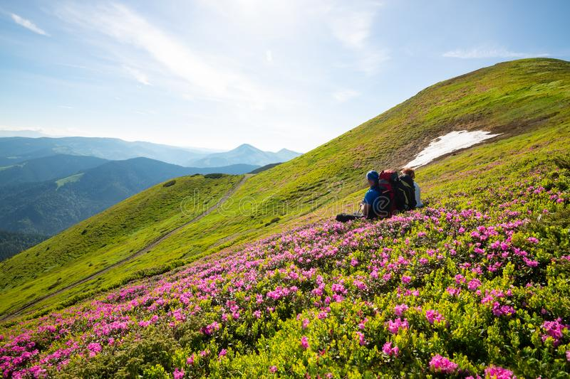 Happy adventurers with backpacks relax on trail. Among flowering pink rhododendrons on sunny day and admire panorama of mountains. Epic travel in the mountains royalty free stock photography