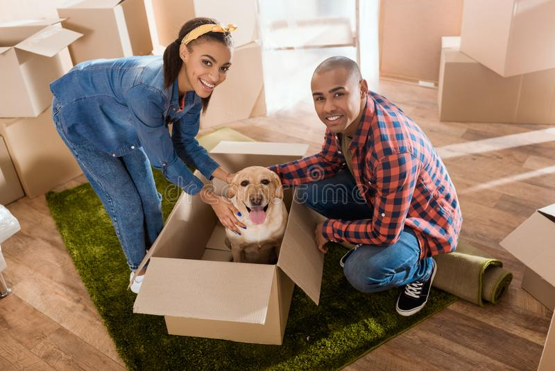 happy african american couple with labrador dog in cardboard box moving to royalty free stock images