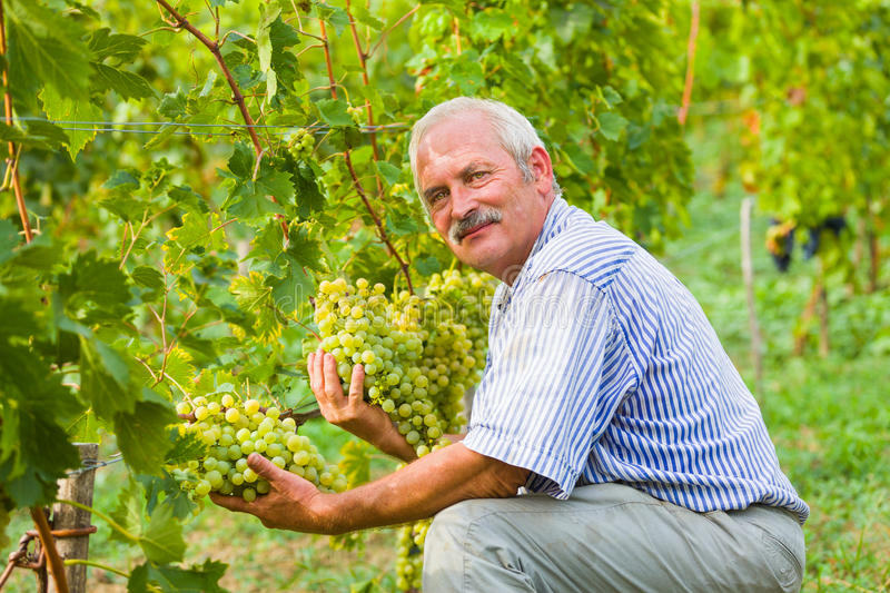 Happy agrarian stock photography