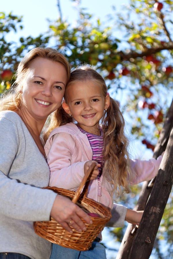 Happy apple harvest stock image