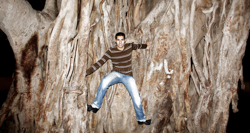 Happy arab egyptian young man climbing huge tree stock image