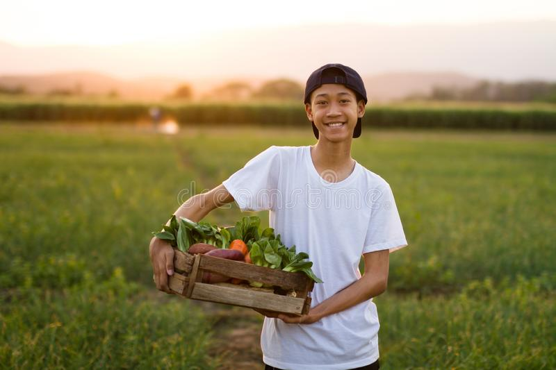 Happy asia farmer smiling and hold full basket of organic vegetable. Standing in middle farm at sunset on background royalty free stock images
