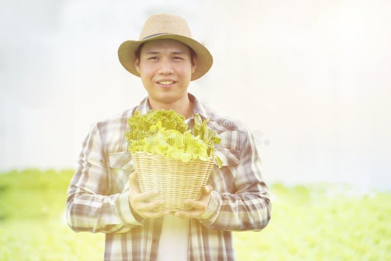 Happy Asian farmer gardener man hand hold basket of fresh green oak organic vegetable in greenhouse hydroponic organic farm,Small royalty free stock image