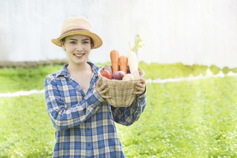 Happy Asian farmer gardener woman hand hold basket of fresh colorful organic vegetable in greenhouse hydroponic organic farm,Small stock images