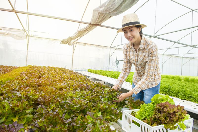 Happy Asian farmer gardener woman hand hold basket of fresh colorful organic vegetable in greenhouse hydroponic organic farm,Small stock photos