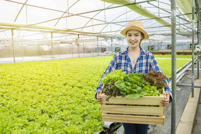 Happy Asian farmer gardener woman hand hold basket of fresh green organic vegetable in greenhouse hydroponic organic farm,Small stock photography
