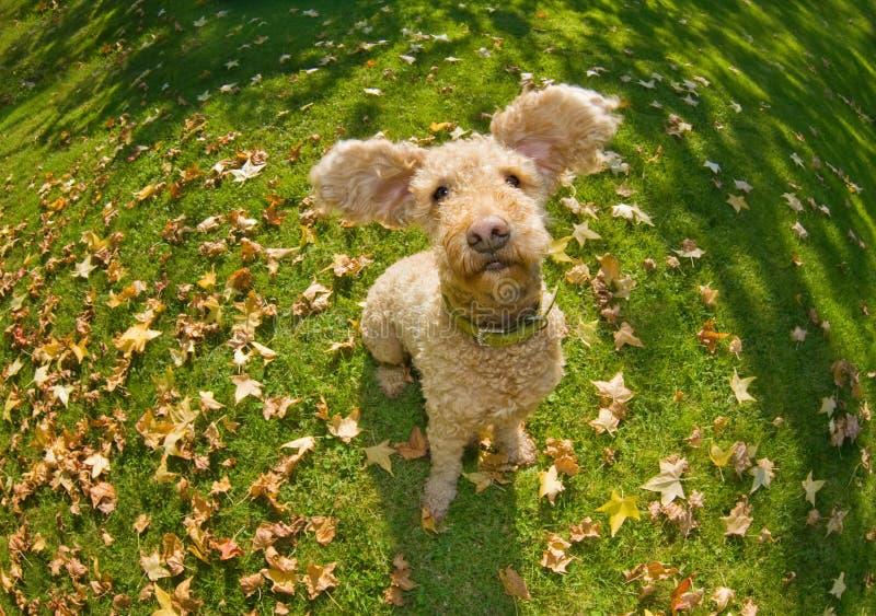 Happy autumn dog stock photography
