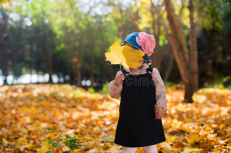 Happy autumn. A little baby girl is playing with falling maple leaves and laughing. Girl hid her face with a maple leaf. stock images