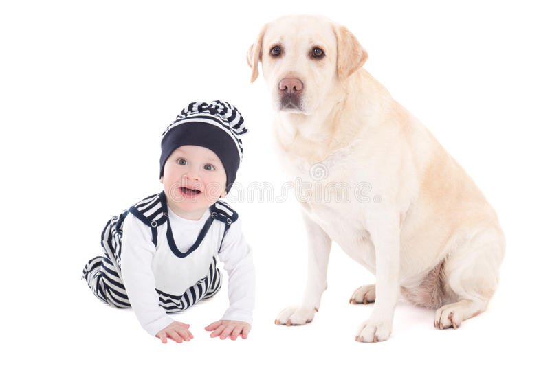 happy baby boy and beautiful dog golden retriever sitting isolated on white stock photography