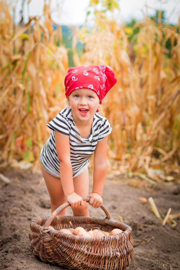 Happy baby girl on the garden with harvest of potatoes in the basket near field dry corn background. Dirty child in royalty free stock images