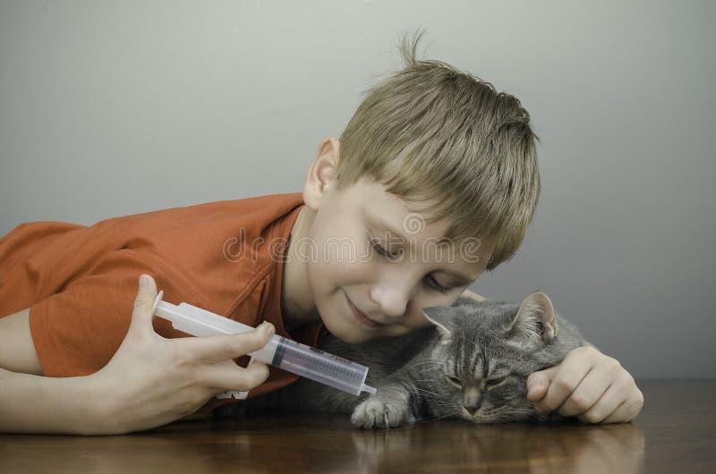 Happy baby kissing cat stock image