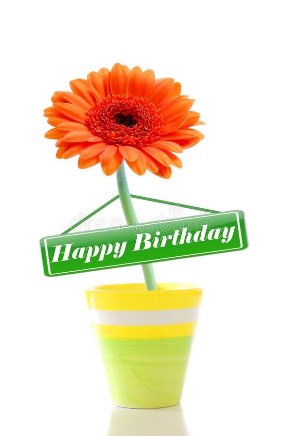 Happy birthday. Greeting card with flower isolated on white background royalty free stock image