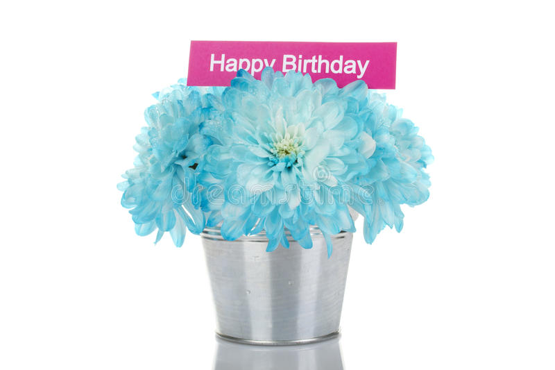 Happy Birthday. Blue bouquet of chrysanthemums in a steel bucket. In chrysanthemums card with the text Happy birthday. Isolated stock photo