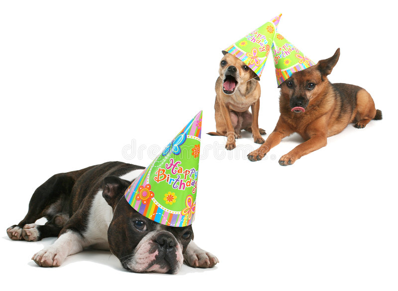 HAPPY BIRTHDAY!. Three dogs with birthday hats on their heads royalty free stock photo