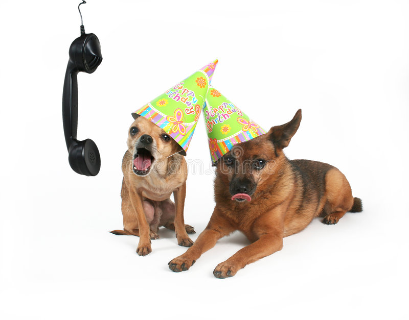 HAPPY BIRTHDAY!. Two dogs with birthday hats on their heads stock photos