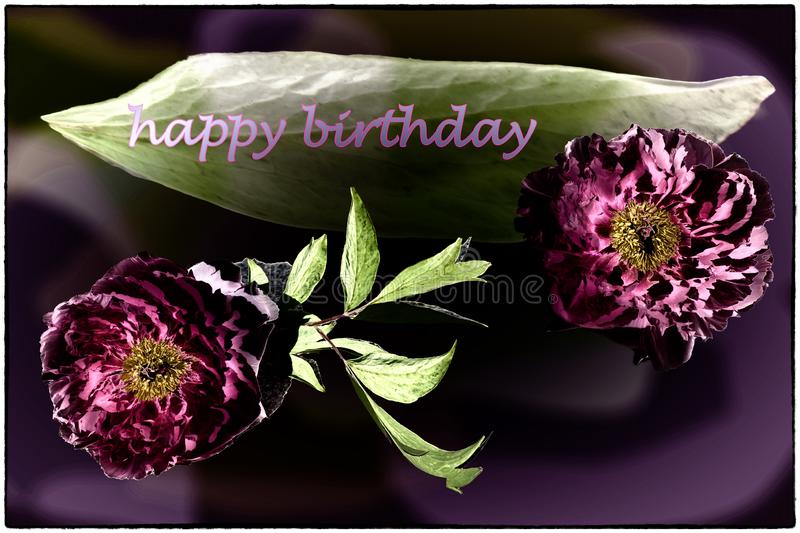 Happy Birthday card with peonies in pink, dark violet and green. Happy birthday card with brilliant colors, peony and leaves background and edging stock image