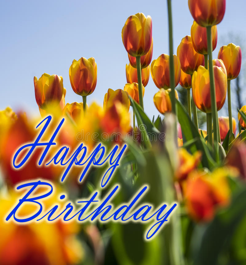 Happy Birthday. Card with Tulip flowers royalty free stock photography