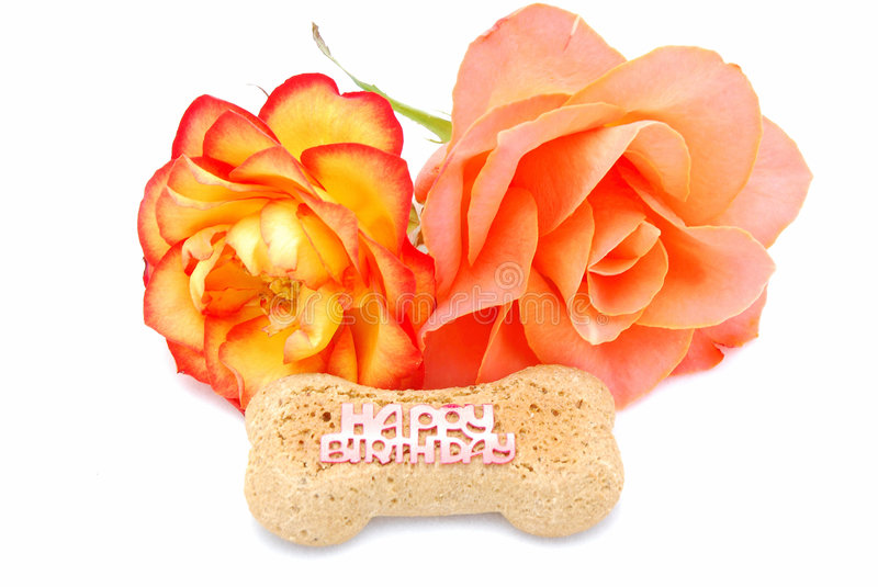 Download Happy Birthday dog biscuit stock image. Image of blossoms - 7766451