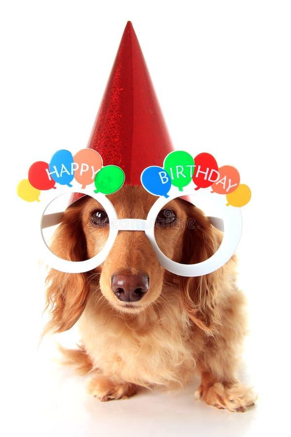 Happy Birthday dog. Dachshund puppy wearing Happy Birthday eye glasses and a party hat stock photo