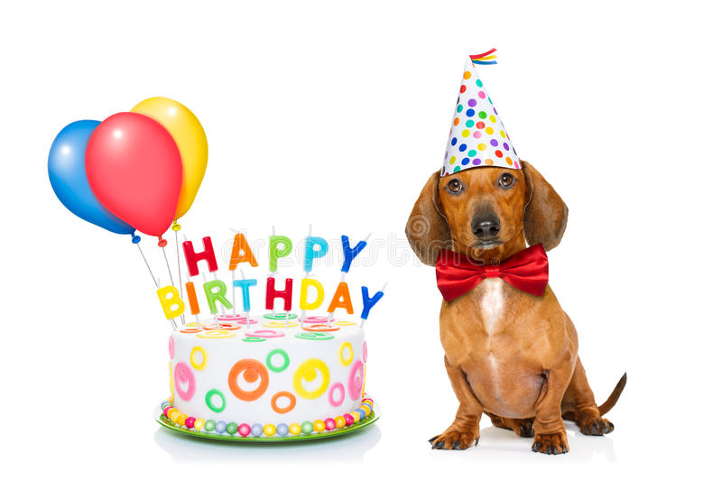 Happy birthday dog. Dachshund or sausage dog hungry for a happy birthday cake with candles ,wearing red tie and party hat , isolated on white background stock photo