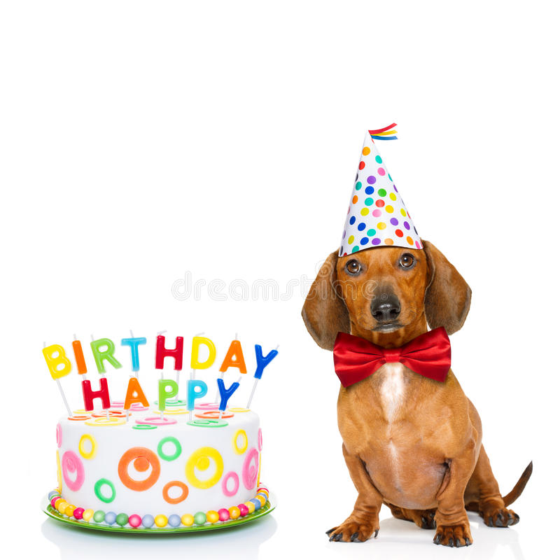 Happy birthday dog. Dachshund or sausage dog hungry for a happy birthday cake with candles ,wearing red tie and party hat , isolated on white background stock images