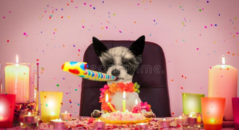 Happy birthday dog stock photo