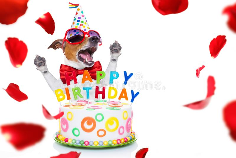 Happy birthday dog. Jack russell dog  as a surprise, singing birthday song  like karaoke with microphone ,behind funny cake,  wearing  red tie and party hat stock photography
