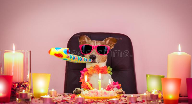 Happy birthday dog. Happy jack russell dog having a party with serpentine streamers, for  birthday  and blowing a whistle horn royalty free stock photography