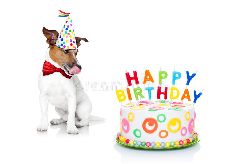 Happy birthday dog. Jack russell dog with licking tongue and hungry for a happy birthday cake with candels ,wearing red tie and party hat , isolated on white