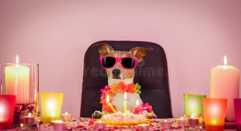 Happy birthday dog. Happy  birthday jack russell dog with lots of confetti around in love for valentines or aniversary, cake ,sunglasses and candles royalty free stock photography