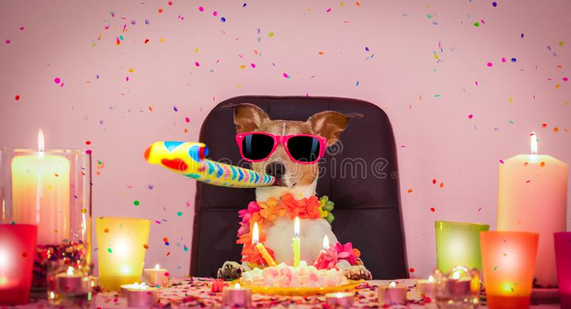 Happy birthday dog. Happy  birthday jack russell dog with lots of confetti around in love for valentines or aniversary, cake ,sunglasses and candles, blowing a stock photos